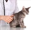Ветеринарные клиники в Палласовке